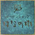Iconhananoki